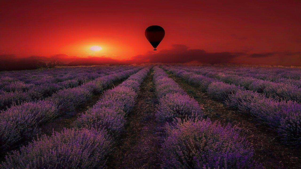 Montgolfiere sur champ de lavande